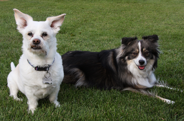 Sparky and Maggie, his younger playmate. Photo: Melissa Cavanagh.