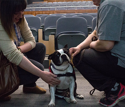 A canine volunteer demonstrates the role of therapy dogs at the 2016 One Health Research Symposium. Photo by Caitlin Taylor.