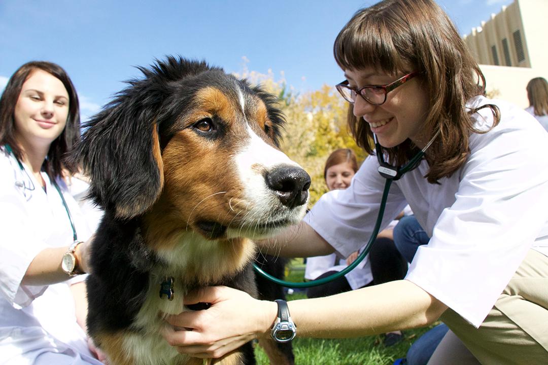 puppy-vet-students